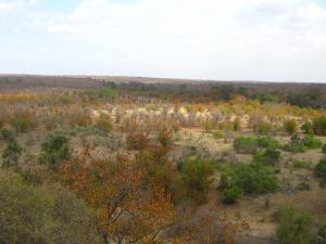 IMG 2677 - Kruger NP
