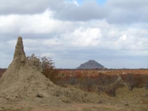 IMG 2681 - Kruger NP