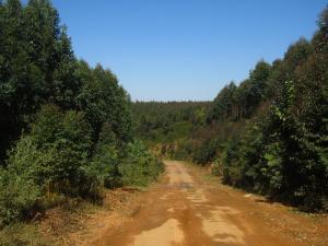 IMG 2839 - Onderweg naar Piggs Peak, Swaziland