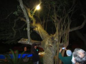 IMG 3144 - Galago voederen Bushbaby lodge
