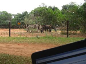 IMG 3165 - Zebra's en gnoes als uitzicht, Bushbaby lodge