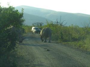 IMG 3207 - Witte neushoorns  Hluhluwe NP