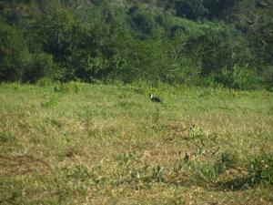 IMG 3221 - Onbekende vogel Hluhluwe NP