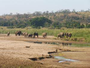 P1010331 - Olifanten Hluhluwe NP Foto Nicole