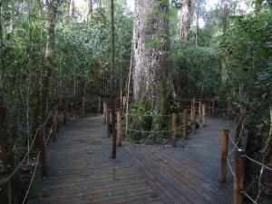 IMG 3592 - Knysna Big Tree, onderweg naar Kaapstad
