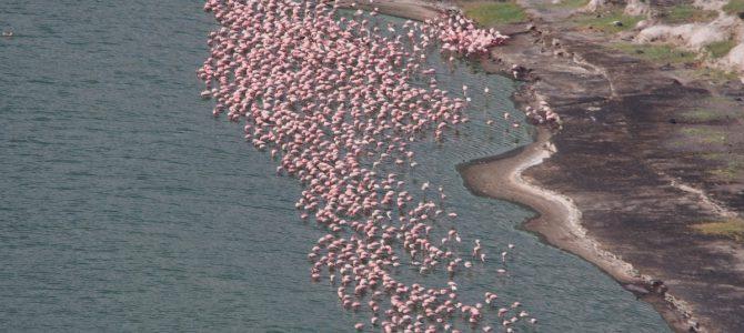 Dag 91-95 (25-29 nov.): Duizenden flamingo's, een verdwenen portemonee en een nieuw hoogterecord