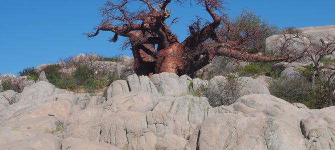 Dag 261-265 (14-18 mei): The greatest hits of the Kalahari
