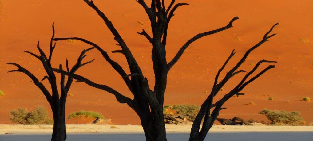 Dag 306-310 (28 juni-2 juli): Welwitschia's, Sossusvlei, Lüderitz en Kolmanskop
