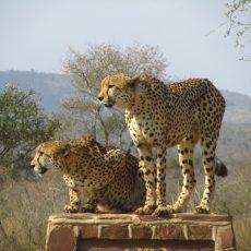 Dag 331-335 (23-27 juli): Pech bij Newcastle en de Big 5 in Kruger NP