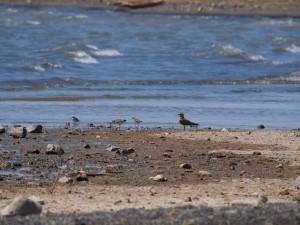PC078038 - Vogels onderweg naar Sibiloi NP