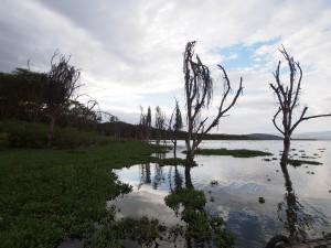 P1029207 - Naivasha meer