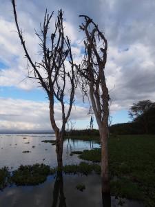 P1029209 - Naivasha meer