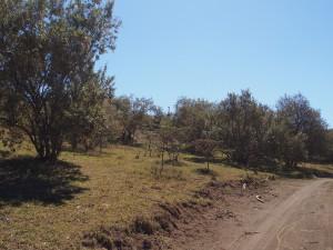 P1039293 - Zoek de giraffe Hells Gate NP