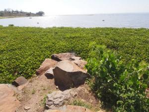 P1049496 - Victoria meer bij Kisumu