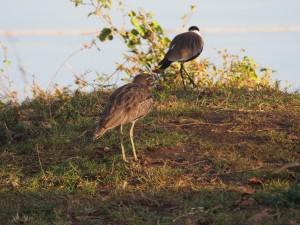 P1059520 - Vogels Victoria meer