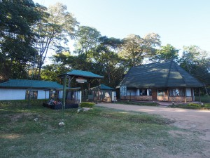 P1069540 - Kakamega Forest NR