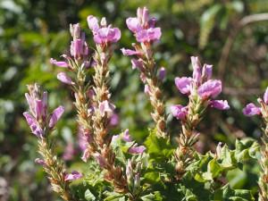P1069565 - Bloemen Kakamega Forest NR
