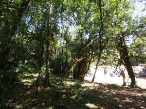 P1069610 - Isiukhu waterval Kakamega Forest NR