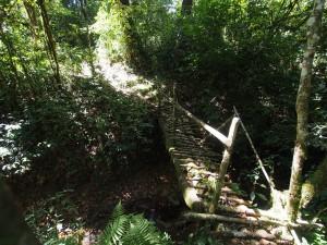 P1069620 - Bruggetje Kakamega Forest NR