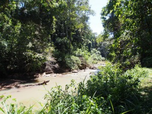 P1069650 - Kakamega Forest NR