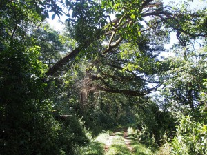 P1069658 - Kakamega Forest NR