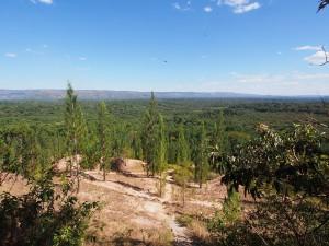 P1069669 - Kakamega Forest NR