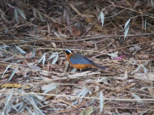 P1089691 - Vogel op Karibuni Kitale campsite