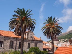 P9141049 - Dubrovnik