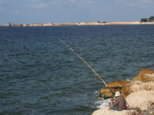 P9291857 - Baai van Alexandrië