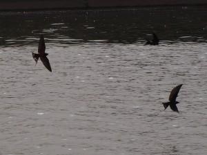 PA093278 - Al-Azhar park Cairo (badende zwaluwen)