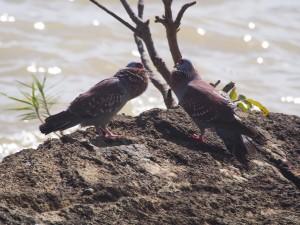 PB125615 - Vogels bij Tana meer