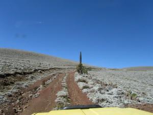 IMG 4165 - Beklimming van Tullu Dimtu Bale Mountains NP