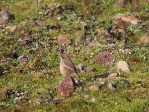 PB297419 - Vogel in Bale Mountains NP