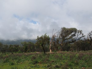 PB297506 - Bale Mountains NP