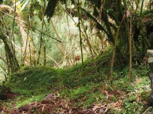PB297518 - Meneliks gazelles in Bale Mountains NP