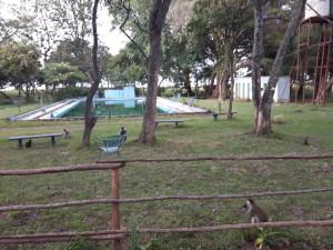 20161130 175805 - Vervet apen Hawassa meer