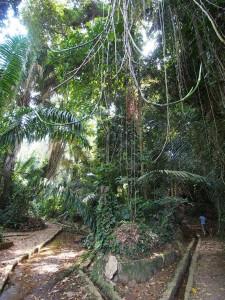 P1180476 - Jungle in botanische tuinen Entebbe