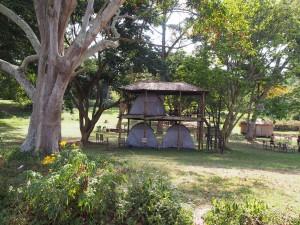P1180568 - Tentenflat in botanische tuinen Entebbe