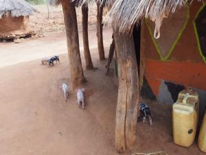 P1210717 - Village walk bij Nyero rotstekeningen