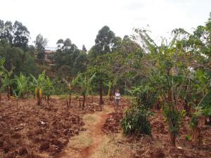 P1210729 - Patricia in bananenplantage