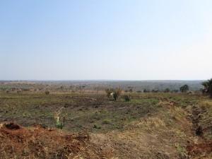 IMG 4208 - Murchison Falls NP