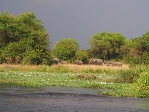 P1271598 - Olifanten Murchison Falls NP