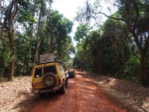 P1281649 - Budonga Forest Murchison Falls NP