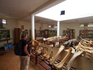 P1301657 - Museum Entebbe dierentuin