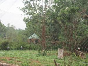 P1301689 - Vogelkooi Entebbe dierentuin
