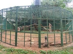 P1301730 - Eenzame baviaan Entebbe dierentuin