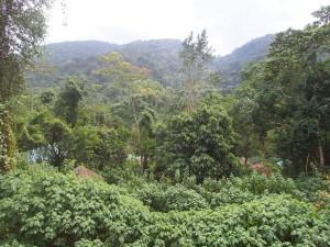 P2072135 - Uitzicht restaurant Buhoma Community Camp