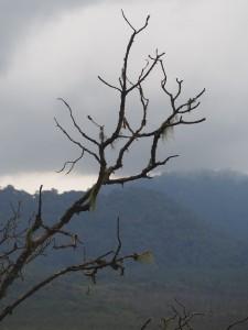 P2142519 - Uitzicht Nyungwe Forest NP