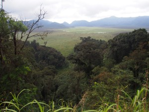 P2142523 - Uitzicht Nyungwe Forest NP