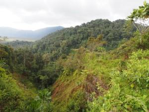 P2142529 - Uitzicht Nyungwe Forest NP